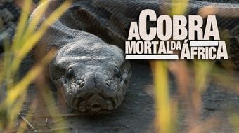 Assistir A Cobra Mortal da África no National Geographic HD 30/10/2020 às 05:00
