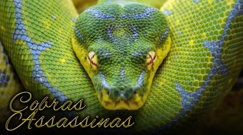 Assistir Cobras Assassinas no National Geographic HD 30/10/2020 às 04:15